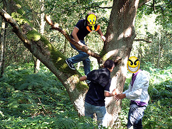 Tree Climbers Sherwood Forest